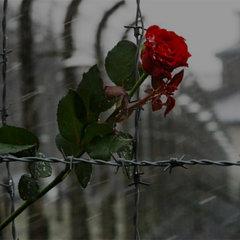 11 апреля был освобожден лагерь смерти Бухенвальд