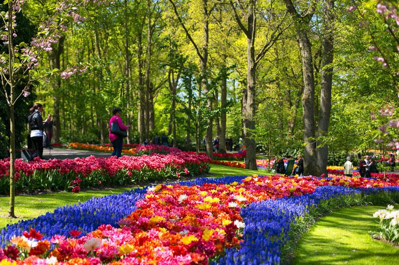 Парк Кекенхоф в Нидерланда Медиапроект s-t-o-l.com