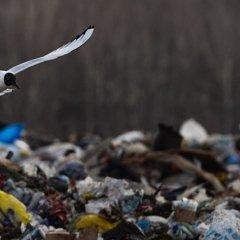 О мусоре на земле, в человеке и в церкви