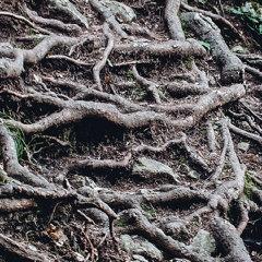 Пробиться к корням